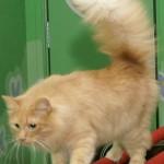 кошка елена-2